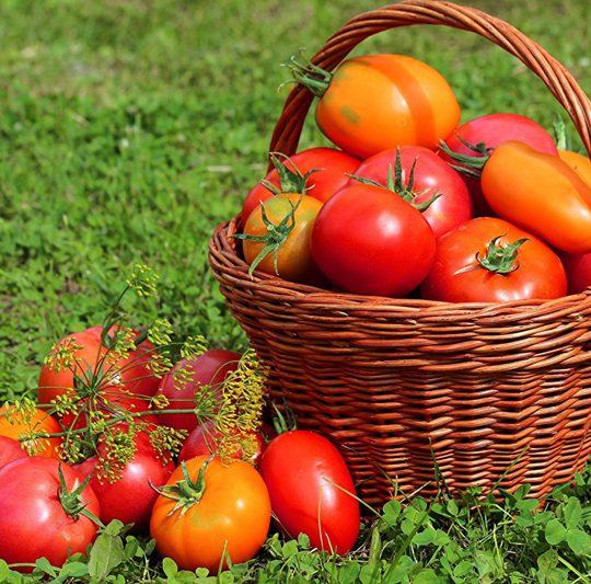 وجود رگه های سفید در گوجه فرنگی و رابطه آن با سرطان