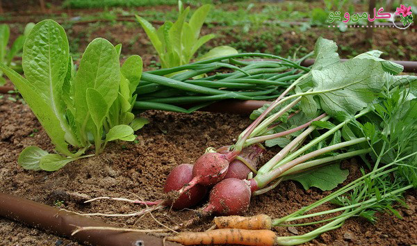 سبزیجات مناسب فصل پاییز و زمستان
