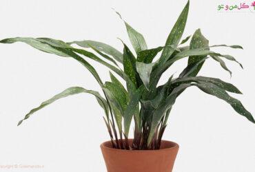houseplant 98359817 بررسی تمامی مشکلات برگ عبایی