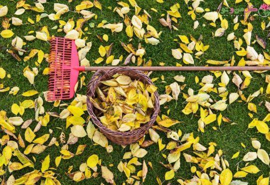 4 روش استفاده از برگ های پاییزی در باغبانی
