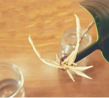 تکثیر گیاهان از طریق برگ | ریشه دار کردن برگ گیاهان