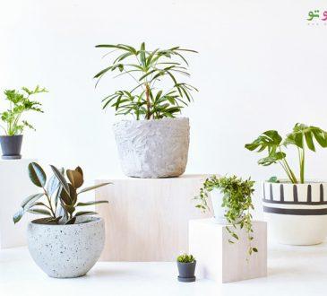 آیا گیاهان نیز احساس درد می کنند ؟!