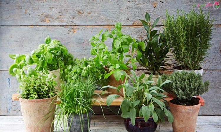 کاشت سبزیجات در خانه