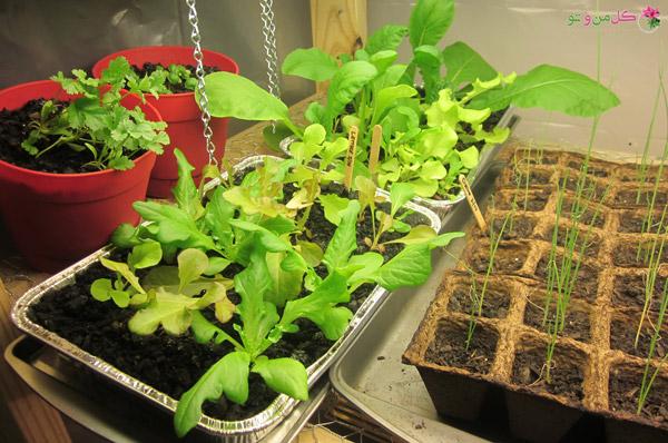 کاشت سبزیجات در خانه - سبزی خوردن