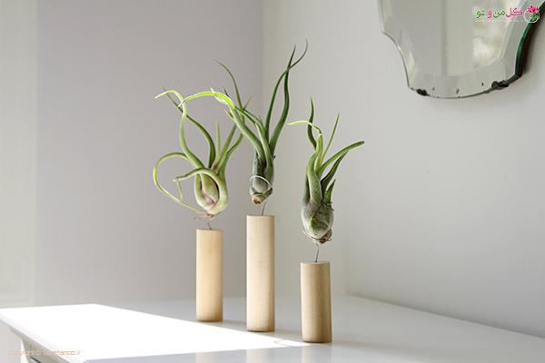 نیازهای گیاهان هوازی