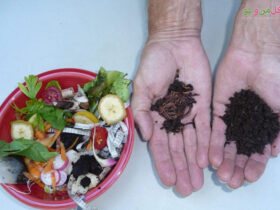 مراحل تولید ورمی کمپوست از پسماند غذایی در خانه