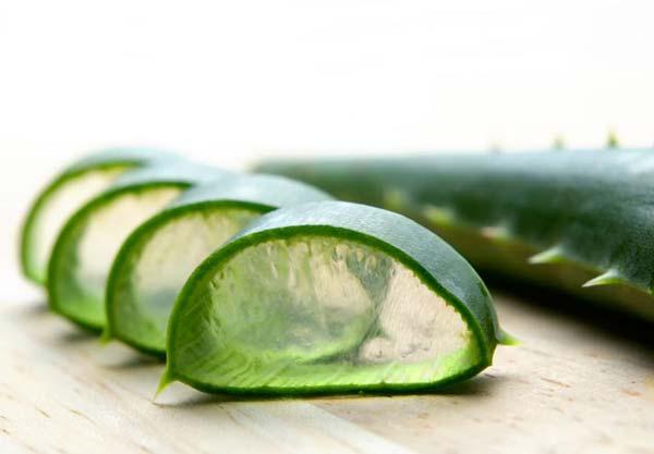 آلوئهورا گیاهی مفید برای افراد دیابتی