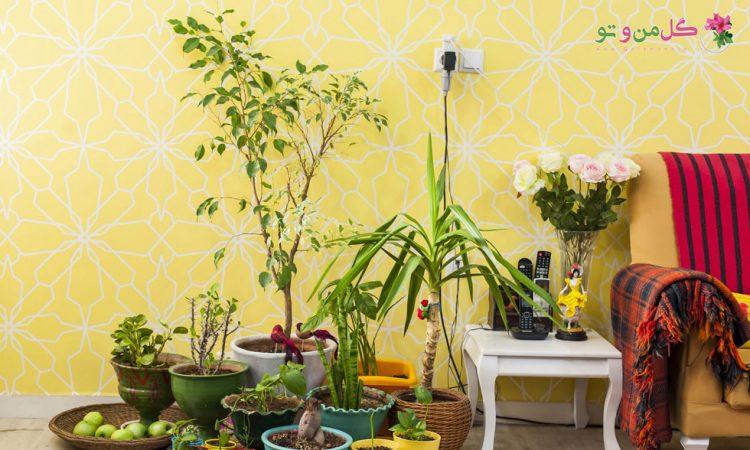 4 نکته کاربردی برای داشتن گیاهان سالم