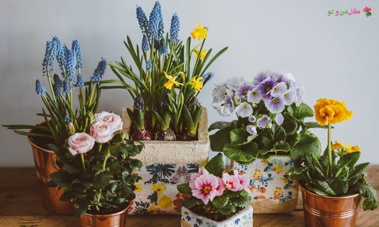 نور فیلتر شده برای گیاهان آپارتمانی