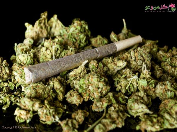 تحقیقات در خصوص ماریجوانا
