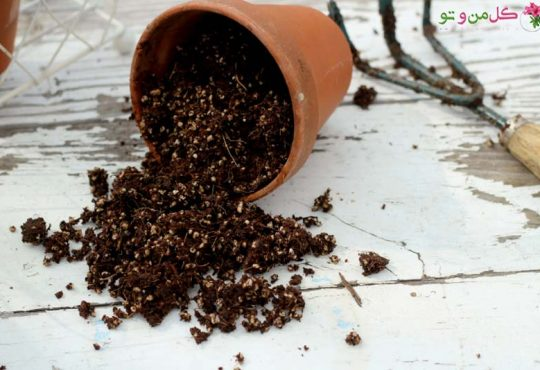 ضدعفونی کردن خاک گیاهان
