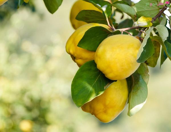 با 14 خاصیت بی نظیر میوه به آشنا شوید