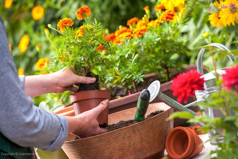 راهکارهای خانگی برای از بین بردن پشه گلدان