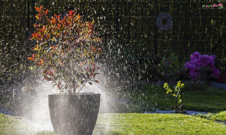میزان آب دهی به گلدان