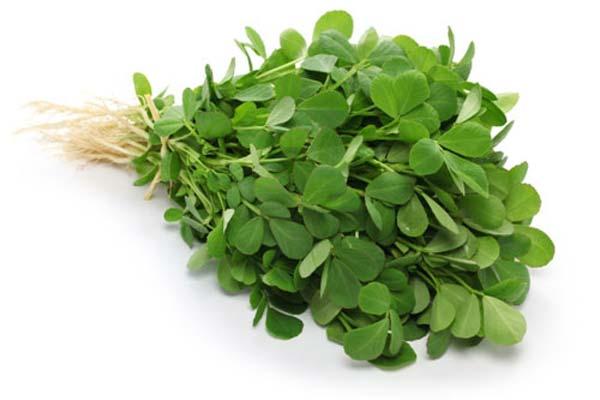 شنبلیله گیاهی مفید برای افراد دیابتی