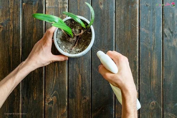 ضد عفونی کردن خاک گلدان به روش شیمیایی