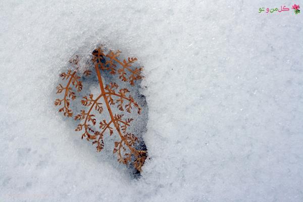 فواید برف برای گیاهان