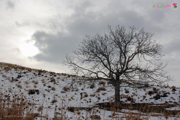 فواید بارش برف برای گیاهان