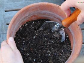 روش های ضدعفونی کردن خاک گلدان