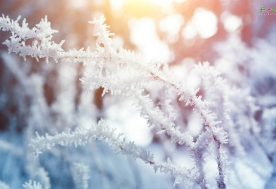 5 دلیل برای کاشت درخت در فصل زمستان