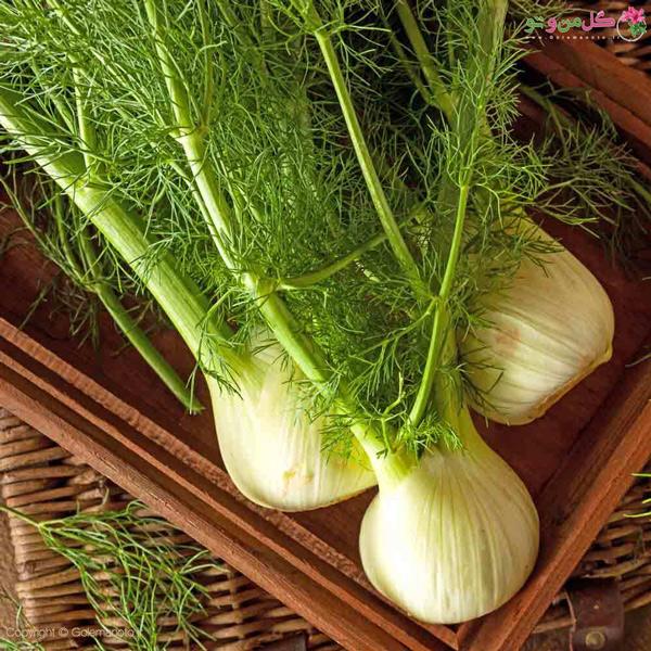 گیاه رازیانه - خواص رازیانه برای سلامتی