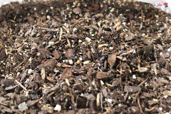 مخلوط مناسب خاک مناسب بن سای