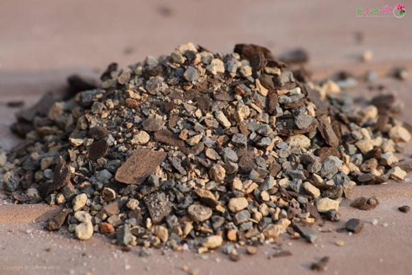 خاک مناسب بونسای