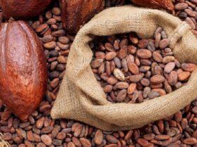 11 3 فواید و خواص کاکائو برای بدن