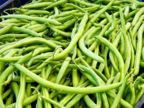 26 3 فواید و خواص لوبیا سبز برای سلامتی