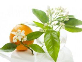 5 4 آشنایی با خواص بهار نارنج