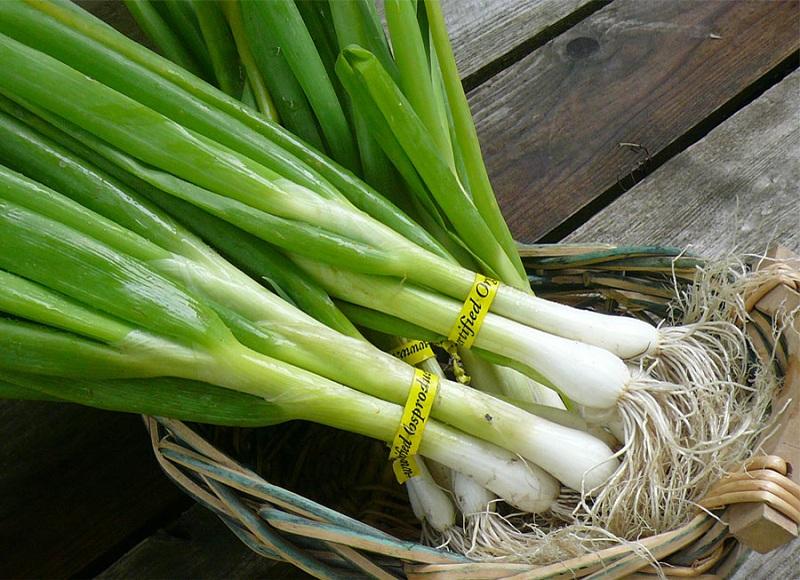 green onion 1 با خواص پیازچه آشنا شوید