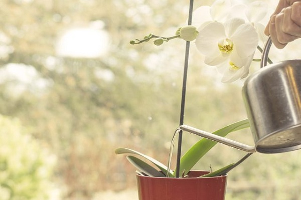 گیاهان خود را با استفاده از آب برنج آبیاری کنید.
