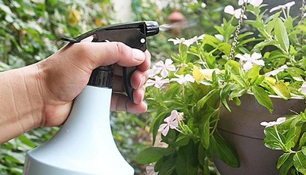 از آسپیرین برای کمک به رشد گیاهان خود استفاده کنید.