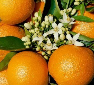 خواص نارنج برای سلامتی: