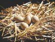 خواص تخم کبک برای سلامتی بدن: