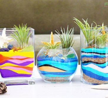 چطور یک تراریوم زیبای شنی برای گیاهان هوازی درستکنیم