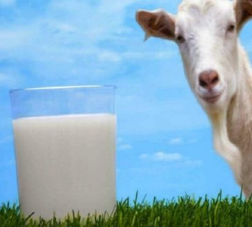 خواص شیر بز