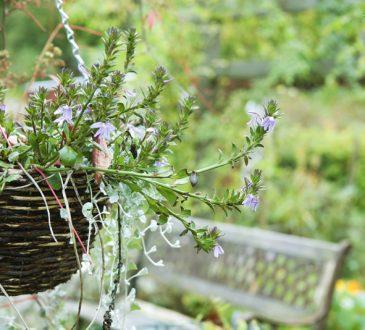معرفی گیاهان مقاوم به گرما