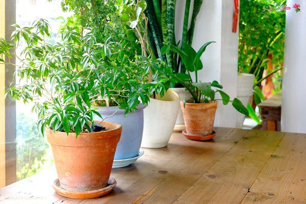 نگهداری از گیاهان آپارتمانی در فصل زمستان