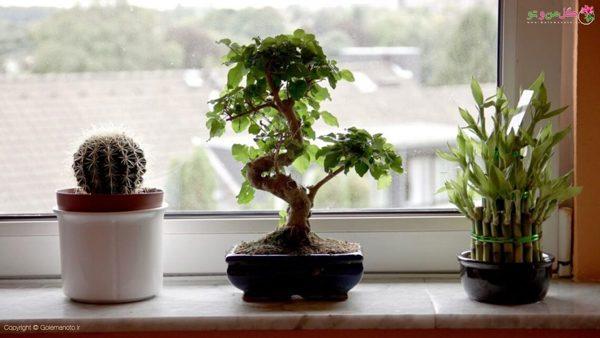 نگهداری از گیاهان در فصل زمستان