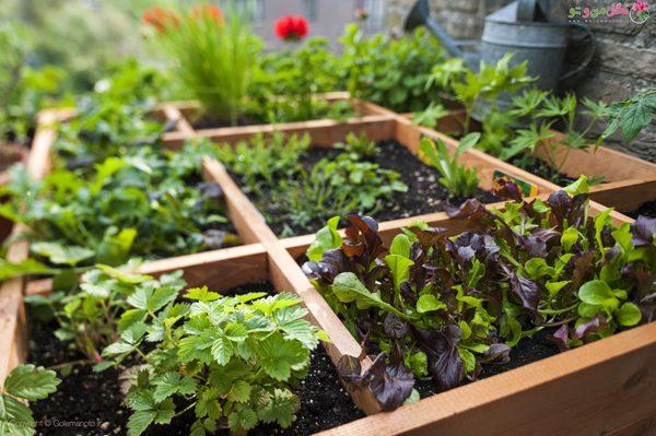 کاشت سبزیجات در زمستان