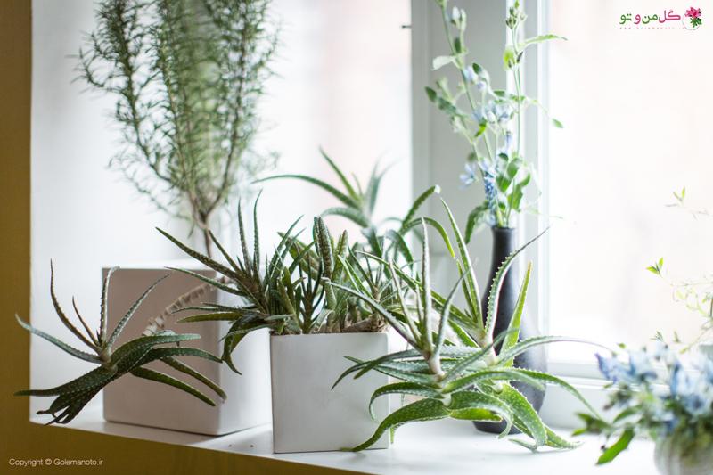 نحوه صحیح نگهداری از گیاهان در فصل زمستان