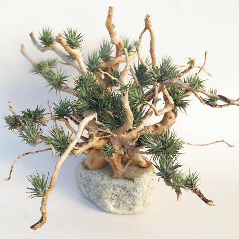 گیاهان مناسب برای محل کار - گیاهان هوازی