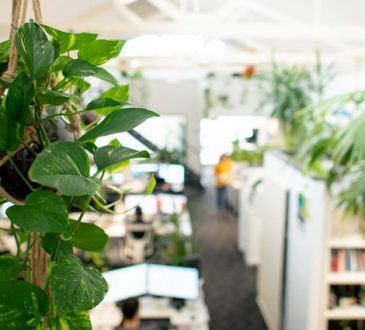 گیاه مناسب محل کار