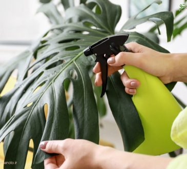 سم خانگی گیاهان آپارتمانی