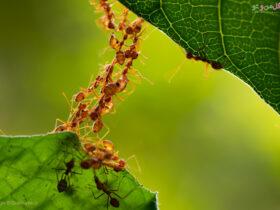 از بین بردن مورچه خاک گلدان