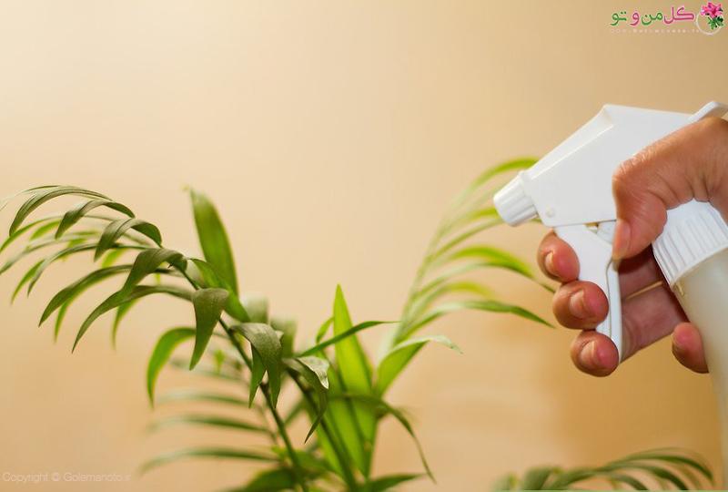 براق و تمیز کردن گیاهان آپارتمانی