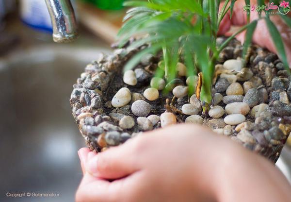 شستن برگ گیاهان