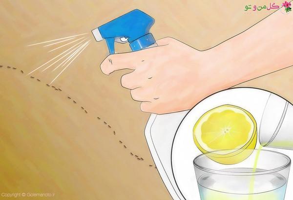 از بین بردن مورچه با آب و لیمو