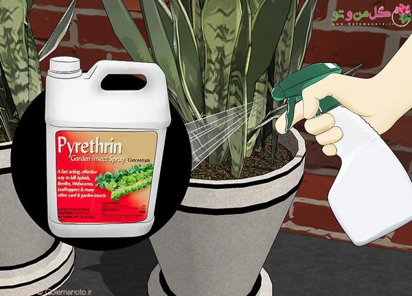 از بین بردن مورچه گلدان با حشره کش پرمترین